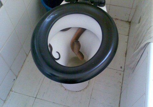 toilet-with-snake