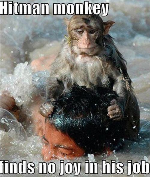 hitman-monkey