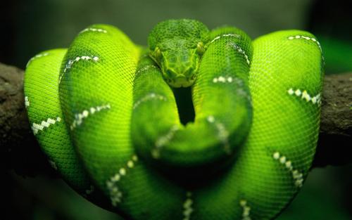 green-snake