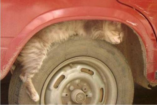 cat-rest01