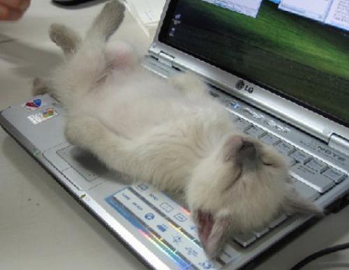cat-rest05
